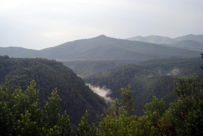 Tsitsikamma Forrest